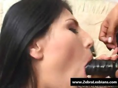zebragirls - swarthy lesbo babes fuck